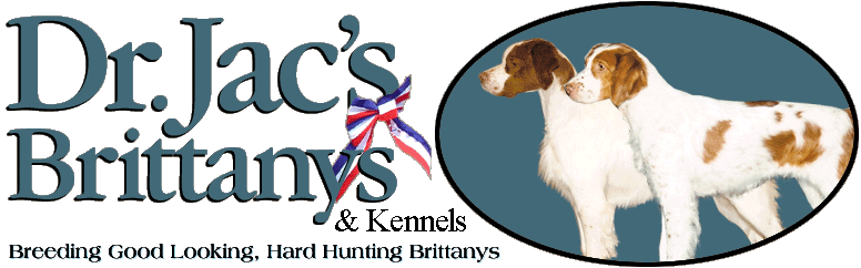 Dr. Jac's Brittanys Kennel - Northern WI Top Quality American Spaniel Brittany Breeder, Dog Show Quality Brits, Brittany Puppies and Hunting Dogs